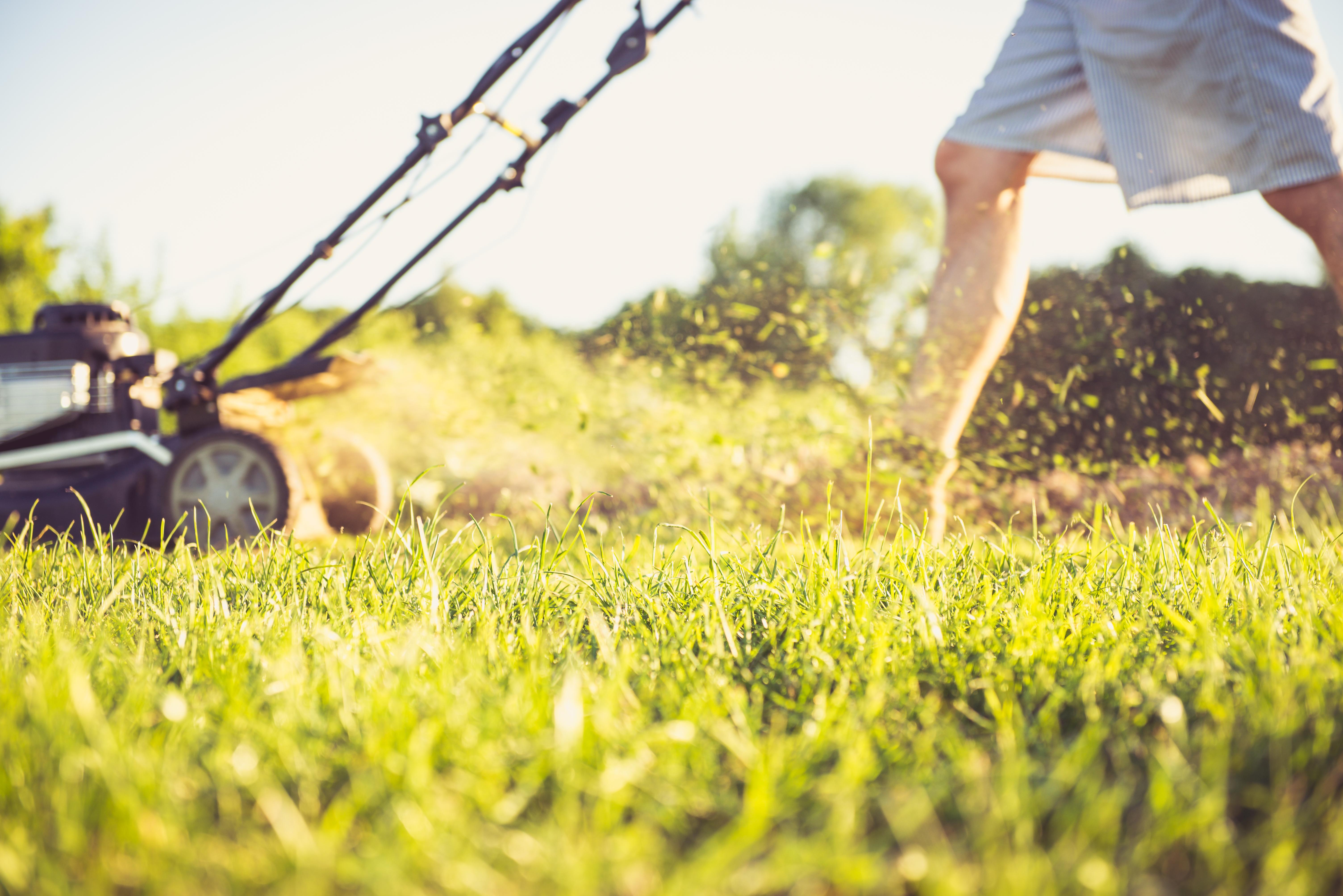 Îngrijirea gazonului pe timpul verii